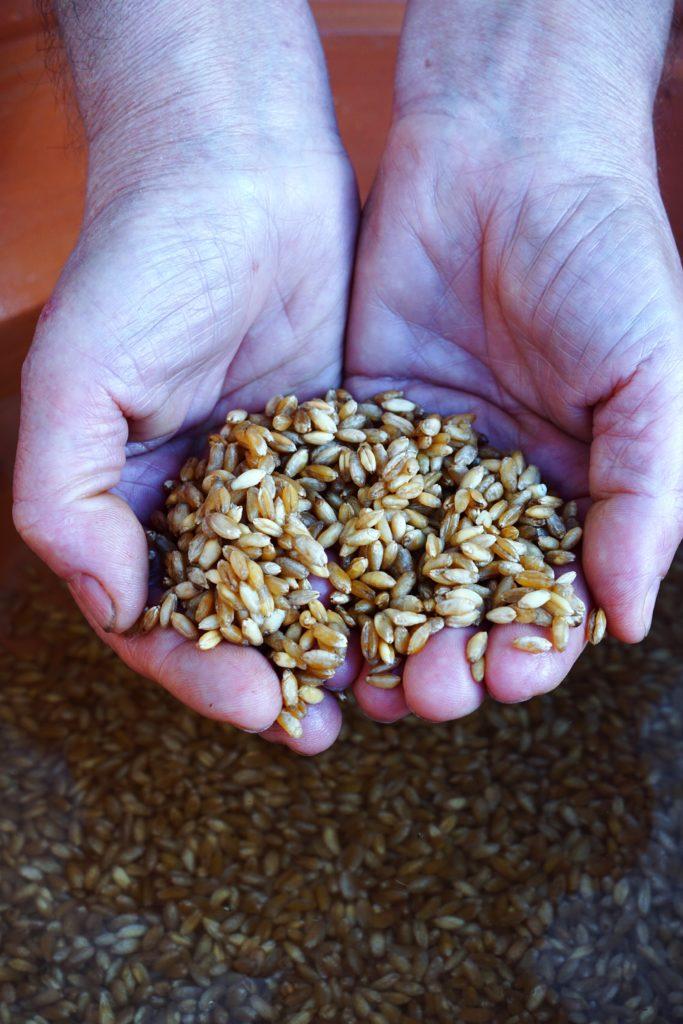 Il grano per su trigu cotu | © Jessica Cani